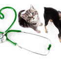 Pet Medical Care