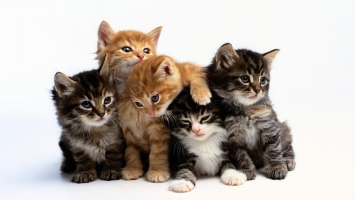 Kittens-Group