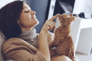 cat sitting cat sitter